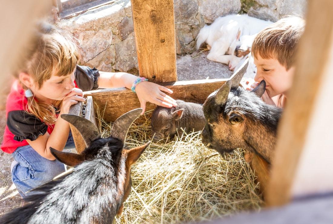 Dahme Bauernhof-Ferien